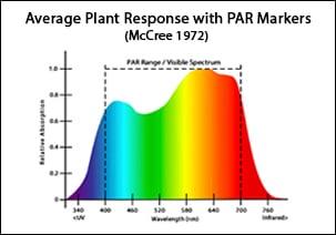 Plant-Response-Light-Spectrum-1
