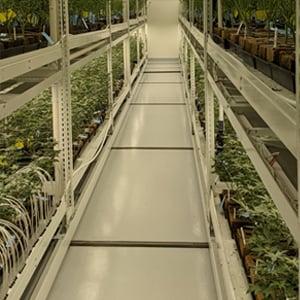 Sea-of-Green-Method-of-Growing-1